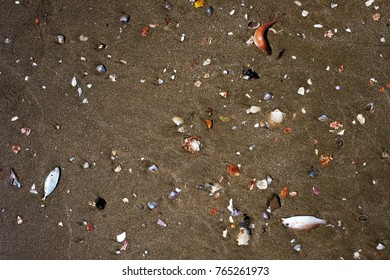 Dead fishes on seashore on dirty sand. Problem with water pollution