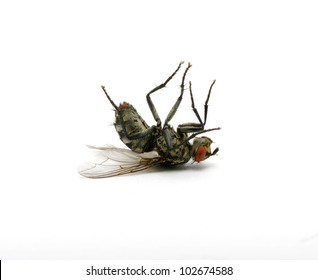 dead fly isolated on a white