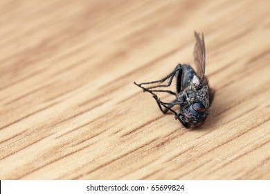 The dead fly lies on a table