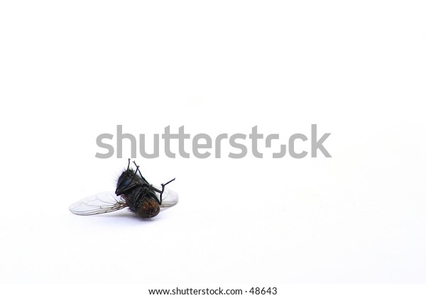 A dead fly with lots of room for copy