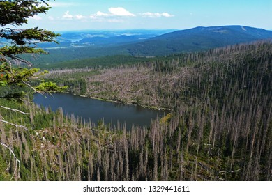 Dead forest after bark beetle infestation, Bayerischer Wald and Sumava