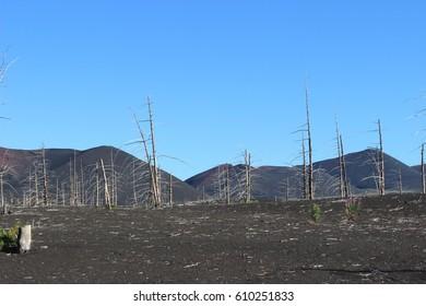 Dead Forest, Tolbachik volcano Kamchatka Russia