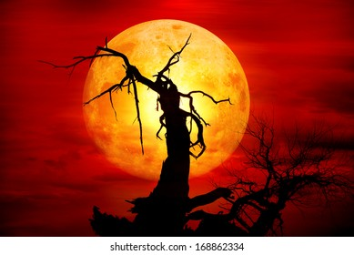 dead forests in the moonlight