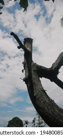 a dead and fruitless tree