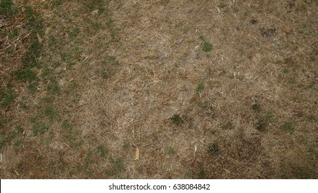 dead grass brown patchy