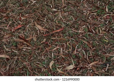 dead grass on atumn