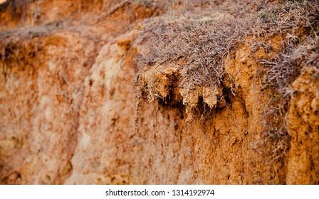 Dead grass on a reddish soil surface unique photo