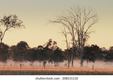 Dead gum tree australian bush outback scene with horses in fog