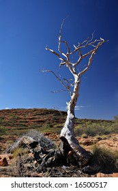 Dead Gum Tree in the outback