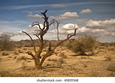 Dead Ironwood Tree from the Mojave Desert at Joshua Tree National Park