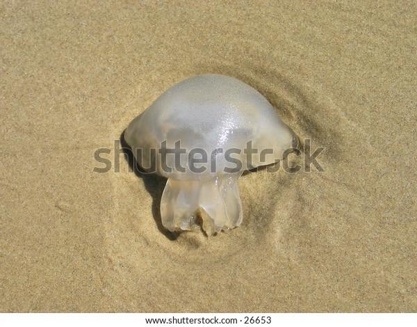Dead jelly fish