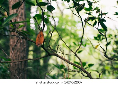 A dead leaf hangs on a branch surrounded by green life.