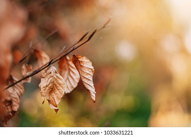 Dead Leaves Bokeh Background Autumn
