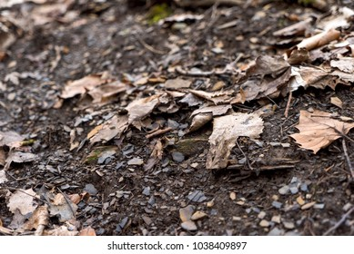 dead leaves forest ground dirt