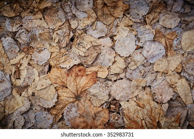 Dead leaves on a ground in spring (useful as background).  Selective focus.