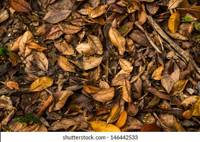 Dead leaves shot ideal for backgrounds and textures