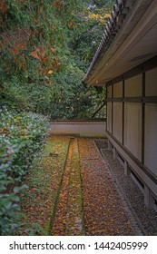 Dead leaves under the eaves