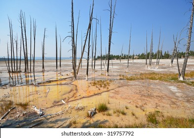 dead lodgepole pine trees in hydrothermal minerals at Yellowstone National Park