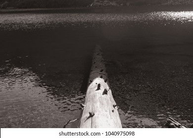 Dead log that is partly submerged in the clear lake showing its depth with sunlight glistening off the water