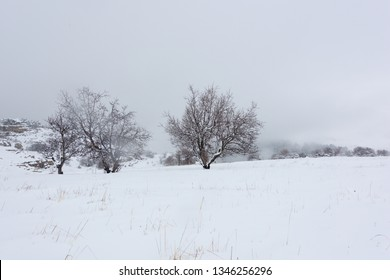 A dead lone tree is covered by snowfall in a winter landscape, with a wooden fence around a snow covered field in Tannourine Cedar reserve, Lebanon.