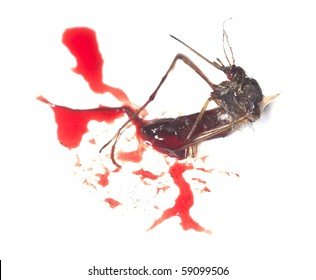 Dead mosquito and human blood.
