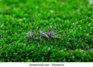Dead mosquitoes on green grass background