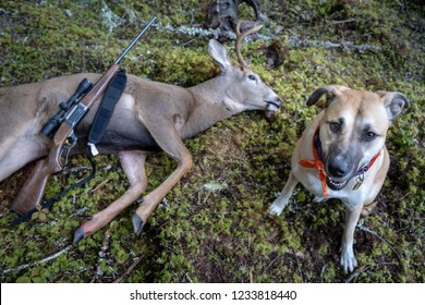 A Dead Mule Deer Buck with a gun on it and a hunting dog beside.