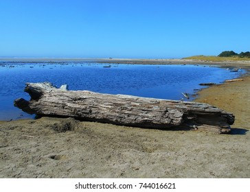 Dead At the Outlet - Driftwood at the Beaver Creek outlet at Ona Beach State Park - near Seal Rock, OR