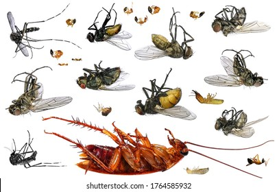 Dead Insects HD Stock Images | Shutterstock