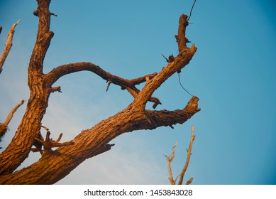 A dead parts of old trees with blue sky background