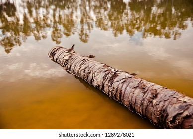 A dead parts of a palm tree in the lake water