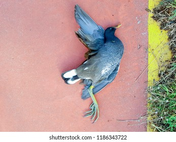 dead pigeon on the red pavement with a yellow line from right side on the road for bicycles
