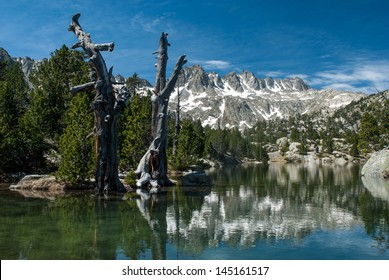 Dead pines in the Estany Tort in National Park of Aiguestortes and Sant Maurici in the Pyrenees, Catalonia, Spain