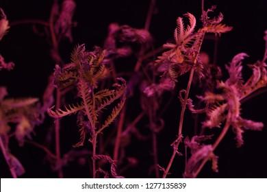 dead plants horrific