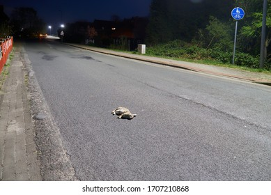 dead rabbit is lying on a rural street at night after having a fatal accident