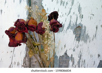 dead roses on faded lost old dry death sadness