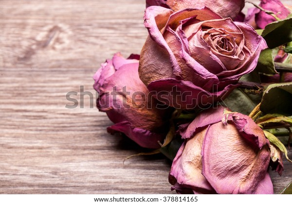 Dead roses on vintage wooden background in studio photo