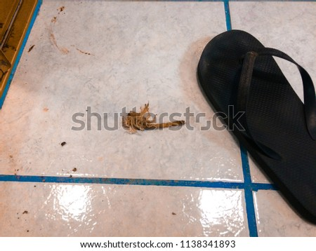 7d2dea416 Dead Scorpion Laying On White Tile Stock Photo (Edit Now) 1138341893 ...