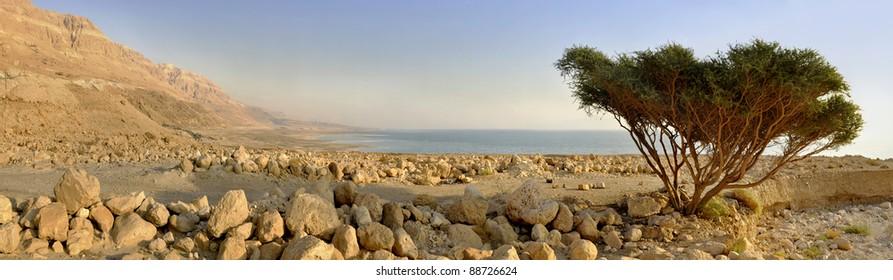 Dead Sea Panorama with Acacia tree