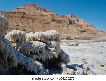Dead Sea Seventeen