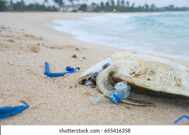 Dead sea turtle among plastic garbage on the beach sand