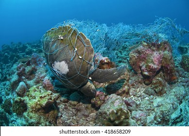 Dead Sea Turtle in a fishing net strangled to death / Ocean Environmental Destruction / Marine Protection