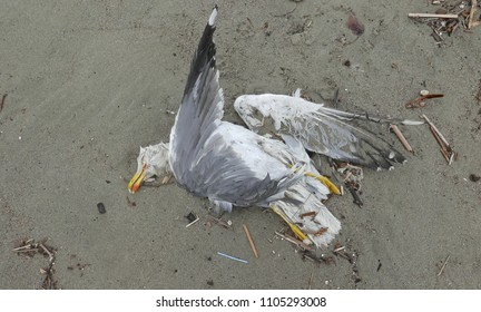 dead seagull corpse on a solitary shore