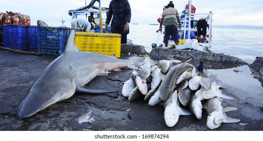 Dead sharks at fish market - shark fin