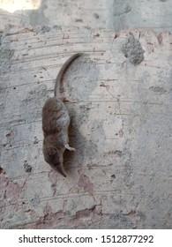 dead shrew on the floor