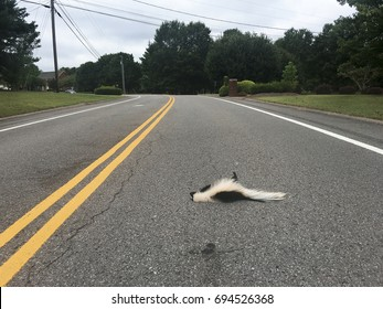 dead skunk in middle of road
