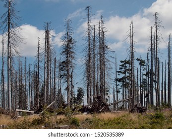 Dead spruce forest in the Sumava National Park (Bohemian Forest, Bömerwald) on the border between Czechia, Bavaria and Austria. Ecological disaster due to the drought and the bark beetle invasion.