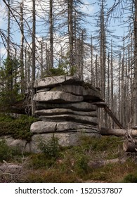 Dead spruce forest in the Sumava National Park (Bohemian Forest, Bömerwald) on the border between Czechia, Bavaria and Austria. Ecological disaster is caused by drought and invasion of bark beetle.