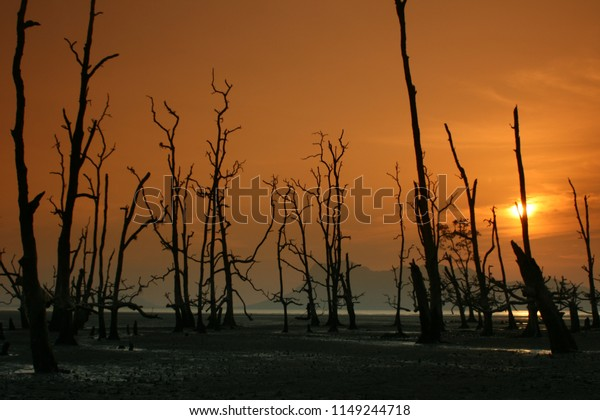dead standing trees at beach of Bako national Park, Malaysia