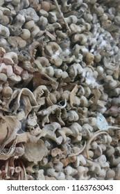 dead tecture in combodia